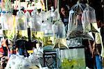 Bags of tropical fish, Chatuchak weekend market, Bangkok, Thailand, Southeast Asia, Asia