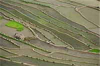 philippine terrace farming - Aerial of the rice terraces around the village of Batad in the Mountain Province in north Luzon island, the Philippines, Southeast Asia, Asia                                                            Stock Photo - Premium Rights-Managednull, Code: 841-03067433