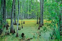 Atchafalaya Swamp near Gibson in the heart of 'Cajun Country', Louisiana, United States of America                                                                                                       Stock Photo - Premium Rights-Managednull, Code: 841-03067537