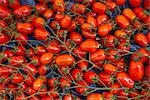 Tomatoes, Marche President-Wilson, Paris, Ile de France, France Stock Photo - Premium Rights-Managed, Artist: R. Ian Lloyd             , Code: 700-03068947