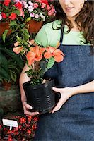 Woman holding a potted plant in a greenhouse                                                                                                                                                             Stock Photo - Premium Rights-Managednull, Code: 837-03070785