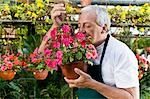 Man smelling flowers in a greenhouse                                                                                                                                                                     Stock Photo - Premium Rights-Managed, Artist: Glowimages               , Code: 837-03070808