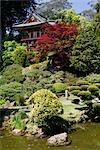 Trees in a park,Japanese Tea Garden,Golden Gate Park,San Francisco,California,USA