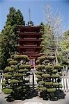 Building in a park,Japanese Tea Garden,Golden Gate Park,San Francisco,California,USA                                                                                                                     Stock Photo - Premium Rights-Managed, Artist: Glowimages               , Code: 837-03074159