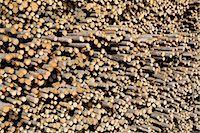 Stack of Pine Logs, Williams Lake, British Columbia, Canada Stock Photo - Premium Royalty-Freenull, Code: 600-03075424