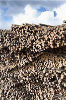 Stack of Pine Logs, Williams Lake, British Columbia, Canada Stock Photo - Premium Royalty-Freenull, Code: 600-03075425