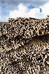 Stack of Pine Logs, Williams Lake, British Columbia, Canada