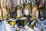 Okopowa Street Jewish Cemetery, Warsaw, Poland Stock Photo - Premium Rights-Managed, Artist: Tomasz Rossa             , Code: 700-03075507