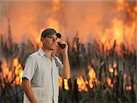 farm phone - Worker With Burning Sugar Cane Stock Photo - Premium Royalty-Freenull, Code: 649-03078208