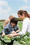 Grandparents and grandson harvesting cabbage Stock Photo - Premium Royalty-Freenull, Code: 685-03082656