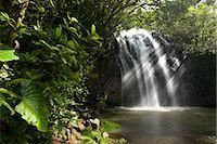 Waterfall, Queensland, Australia                                                                                                                                                                         Stock Photo - Premium Rights-Managednull, Code: 700-03083938