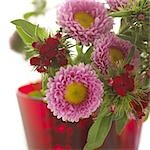 Bunch of aster and sweet Williams Stock Photo - Premium Royalty-Freenull, Code: 689-03123813