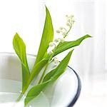 Lilies of the valley in a bowl Stock Photo - Premium Royalty-Freenull, Code: 689-03124003