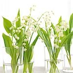Lilies of the valley in glasses Stock Photo - Premium Royalty-Freenull, Code: 689-03124004