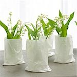 lilies of the valley in white paper bags Stock Photo - Premium Royalty-Freenull, Code: 689-03124005