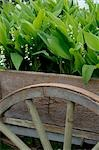 wooden barrow with plants Stock Photo - Premium Royalty-Free, Artist: Beanstock Images, Code: 689-03130888