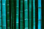 Close-up of Bamboo Forest at Dusk, Near Kyoto, Japan