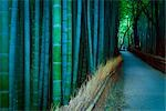 Bamboo Lined Pathway at Dusk, Kyoto, Japan                                                                                                                                                               Stock Photo - Premium Rights-Managed, Artist: Daryl Benson             , Code: 700-03152251