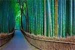 Bamboo Lined Pathway at Dusk, Kyoto, Japan