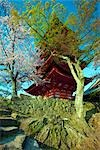 Five Story Pagoda and Cherry Blossoms, Miyajima Island, Japan                                                                                                                                            Stock Photo - Premium Rights-Managed, Artist: Daryl Benson             , Code: 700-03152259