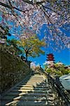 Five Story Pagoda and Cherry Blossoms, Miyajima Island, Japan                                                                                                                                            Stock Photo - Premium Rights-Managed, Artist: Daryl Benson             , Code: 700-03152260