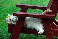 RED TABBY AND WHITE CAT ASLEEP ON CHAIR OUTDOORS Stock Photo - Premium Rights-Managednull, Code: 846-03164011