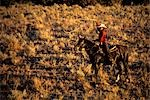 WOMAN COWGIRL ON HORSE WITH LASSO ROCK SPRINGS RANCH BEND OREGON USA