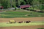 PENNSYLVANIA LANCASTER COUNTY AMISH FARM Stock Photo - Premium Rights-Managed, Artist: ClassicStock, Code: 846-03165305