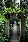 TOURISTS ON FOOTBRIDGE IN RAINFOREST COSTA RICA Stock Photo - Premium Rights-Managed, Artist: ClassicStock, Code: 846-03165362