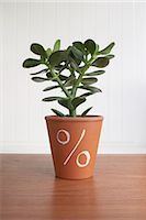 percentage symbol - Potted Jade Plant with Percentage Sign Stock Photo - Premium Royalty-Freenull, Code: 600-03178754