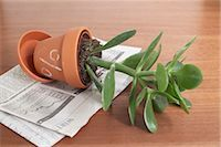 percentage symbol - Potted Jade Plant with Percentage Sign Stock Photo - Premium Royalty-Freenull, Code: 600-03178757