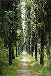 Tree Lined Country Road Stock Photo - Premium Royalty-Free, Artist: Arian Camilleri, Code: 600-03178888