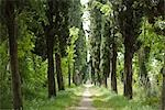 Tree Lined Country Road Stock Photo - Premium Royalty-Free, Artist: Arian Camilleri, Code: 600-03178889