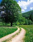 Country Trail Stock Photo - Premium Rights-Managed, Artist: Aflo Relax, Code: 859-03193895