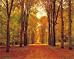 Autumn Road Stock Photo - Premium Rights-Managed, Artist: Aflo Relax, Code: 859-03194049
