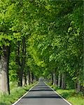 Road, Island of Ruegen, Mecklenburg, Mecklenburg-Vorpommern, Germany Stock Photo - Premium Royalty-Free, Artist: Raimund Linke, Code: 600-03194819