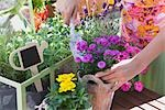 Woman Gardening Stock Photo - Premium Rights-Managed, Artist: Klick, Code: 700-03229391