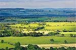 Overview of Fields and Farmland, Dumfries & Galloway, Scotland Stock Photo - Premium Rights-Managed, Artist: Tim Hurst, Code: 700-03230037