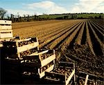 Raw potatoes with a ploughed field, County Meath, Republic Of Ireland Stock Photo - Premium Rights-Managed, Artist: IIC, Code: 832-03232166