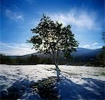Tree on a snow covered landscape, Glencree, Republic Of Ireland Stock Photo - Premium Rights-Managed, Artist: IIC, Code: 832-03232265