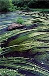 River Bandon, County Cork, Ireland; Flowing river water with reeds Stock Photo - Premium Rights-Managed, Artist: IIC, Code: 832-03233060