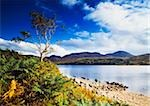 Lough Nacung, Errigal, County Donegal, Ireland; Lake scenic Stock Photo - Premium Rights-Managed, Artist: IIC, Code: 832-03233112