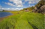 Upper lake, Killarney National Park, County Kerry, Ireland; Tall grass and lake scenic Stock Photo - Premium Rights-Managed, Artist: IIC, Code: 832-03233164