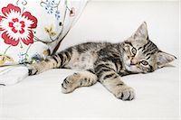 Kitten lying down Stock Photo - Premium Royalty-Freenull, Code: 614-03241159