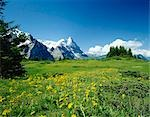 Alpine meadow with Eiger mountains beyond, Grindelwald, Bern (Berne), Bernese Oberland, Swiss Alps, Switzerland Stock Photo - Premium Rights-Managed, Artist: Oriental Touch, Code: 855-03255184