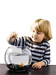 USA, Utah, Provo, Boy (2-3) watching goldfish in bowl Stock Photo - Premium Royalty-Free, Artist: Narratives, Code: 640-03257551