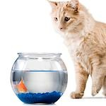 Cat watching goldfish in bowl Stock Photo - Premium Royalty-Free, Artist: Aflo Relax               , Code: 640-03262753