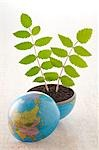 Plants Growing out of Globe