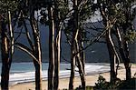 Australia,Tasmania,Tasman Peninsula,Tasman National Park .Late afternoon light on beach and trees.