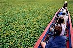 Water hyacinth makes for slow progress cruising up a tributary of the Beni River in the Amazon Basin,Bolivia. Stock Photo - Premium Rights-Managed, Artist: AWL Images, Code: 862-03289480